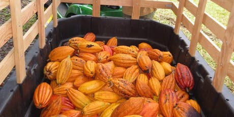 Kona Cacao Orchard Tour and Chocolate Tasting - Mondays tickets