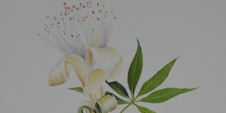 Boab flower in watercolour tickets