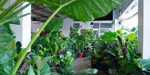 Mentone - MEGA Indoor Plant Warehouse Sale - Tropicana Party
