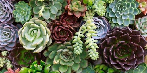Paint & Pot Your Own Succulent Planter