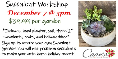 Holiday Succulent Garden - Make and Take
