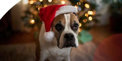 Stockland Baulkham Hills - Paws & Claus