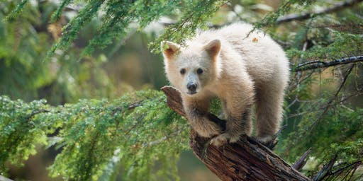 TEACHER PREVIEW | Great Bear Rainforest 3D