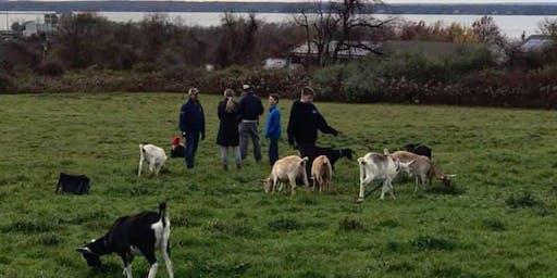 Goat Hikes at Simmons Farm