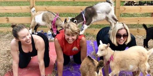 Goat Yoga Bham-Gentle Flow Yoga for Beginners