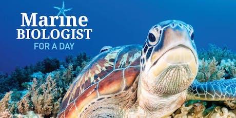 Marine Biologist for a Day High School - Wed 11th Dec 2019 - Sunshine Coast tickets