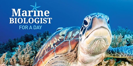 Marine Biologist for a Day - Junior - Mon 16th Dec 2019 - Sunshine Coast tickets
