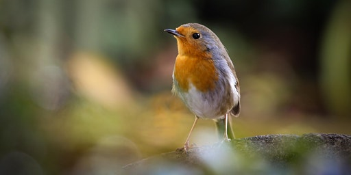 RSPB Big Garden Birdwatch on St Ann's Allotments