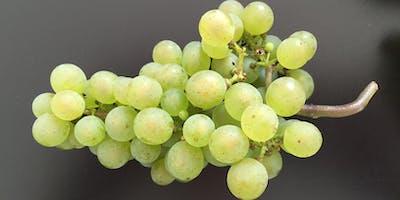 Seltene Reben – Großer Weinabend mit rund 15 Weinen, die man nicht alle Tage im Glas hat