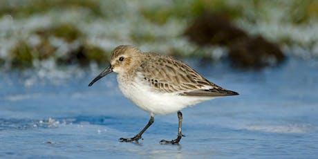 Winter Bird Identification for Beginners tickets
