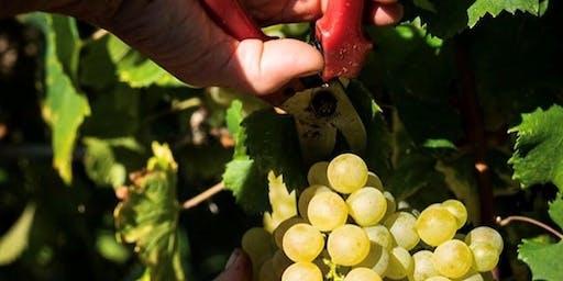 Winemaker Dinner with La Tunella and Giovanna Borreri