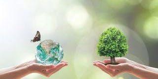 Ser eficiente energéticamente, como política de la empresa