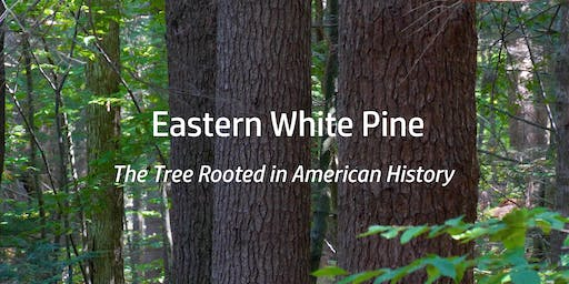 Film Premiere-  Eastern White Pine: the Tree Rooted in American History