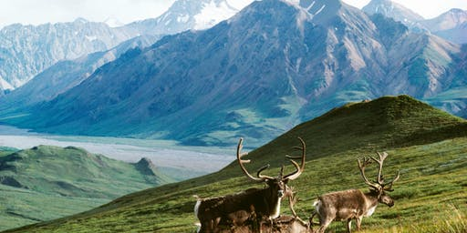 Defenders of Wildlife @Penn: Protect the Arctic