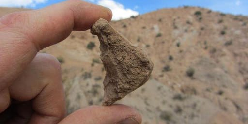 """""""Finding Fossil Mammals in High, Dry Bolivia"""""""