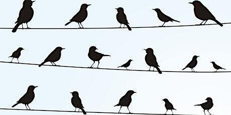 Borden - Radisson Christmas Bird Count tickets