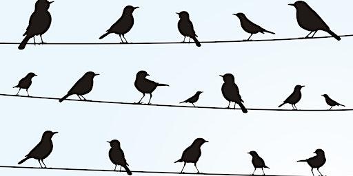 Borden - Radisson Christmas Bird Count