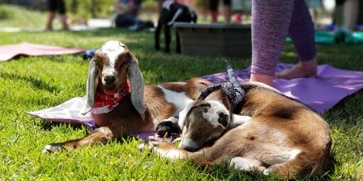 Goat Yoga with Wine and Cheese Tasting