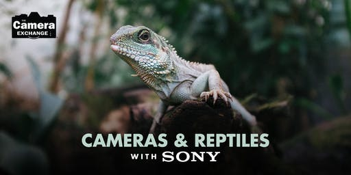 Cameras &  Reptiles with Sony