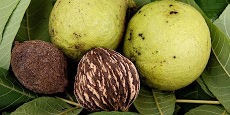 Black Walnuts - A Botanical and Culinary Adventure tickets