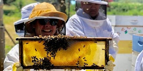 Bee Experience tickets