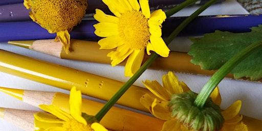 Lápis de Cor na Arte botânica - Módulo I