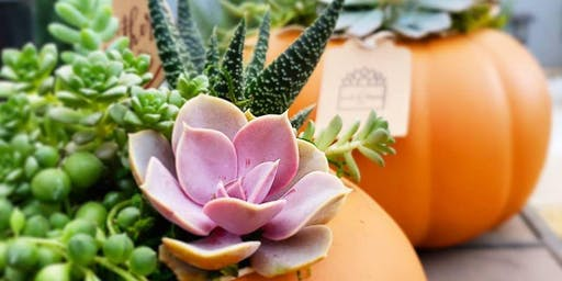 Succulent Centerpiece Workshop