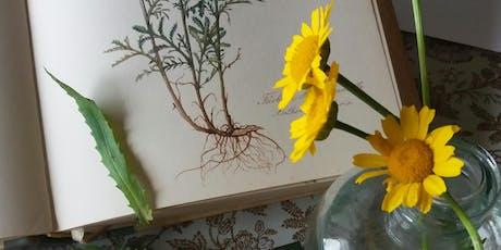 Lápis de Cor na arte Botânica -Modulo II ingressos