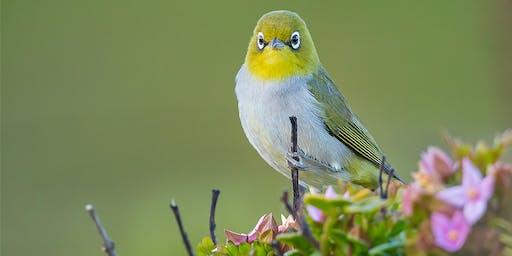 Birdlife Photography Excursion