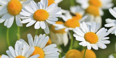 Pushing Up Daisies Workshop tickets
