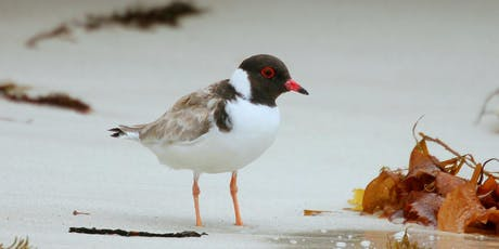 Hooded Plover Monitoring Training tickets