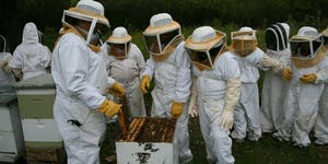 URBAN BEEKEEPING COURSE FOR BEGINNERS