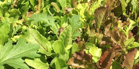 How to grow a baby leaf salad in crop in 1 square metre of space tickets
