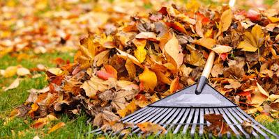 Autumn Gardening Skills