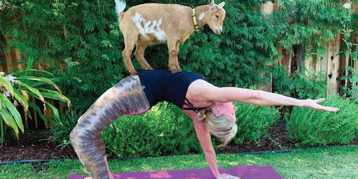 Goat Yoga + Wine + Hors d'oeuvres + Shopping..say no more...