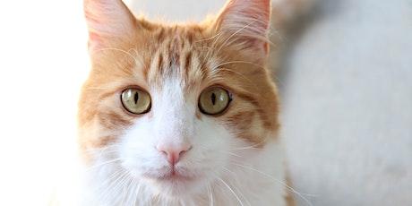EHS Day Camp: Feline Fanatics tickets