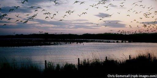 Dawn chorus walk