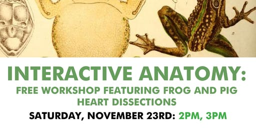 Interactive Anatomy: Free Workshop featuring Frog and Pig Heart Dissections