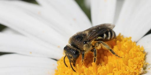 Live and Learn: Beekeeping