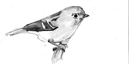 How to draw a bird, from life and from still life.