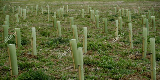 Remembrance Wood dedicate a tree