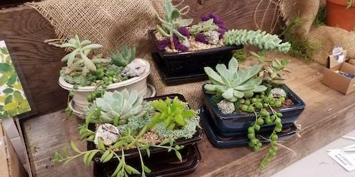 Mini Succulent Crystal Gardens