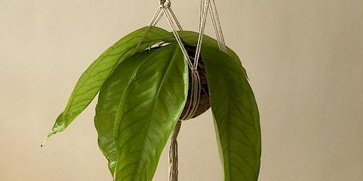 Macramé Plant Hanger Workshop