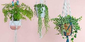 Pinterested: Macramé Plant Hanger