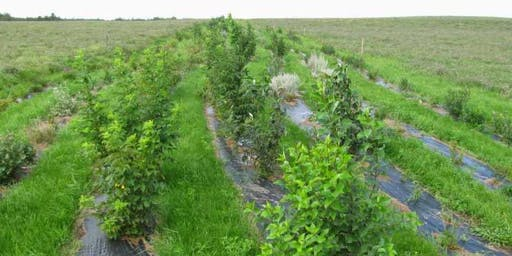 Shelterbelts and Ecobuffers  :  Planting and  Design
