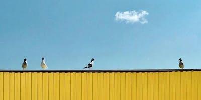 S'ÉMERVEILLER / par Belinda Cannone, Les Mots