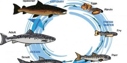 Science in the Valley: Salmon/Ecosystems 2020 - Registration
