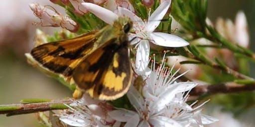 Gully gardeners - Butterfly Gardening