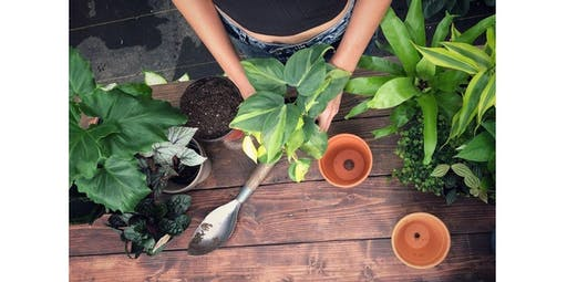 Workshop: Repotting Indoor Plants (2019-12-06 starts at 6:00 PM)