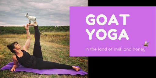 Goat Yoga in the land of milk and honey